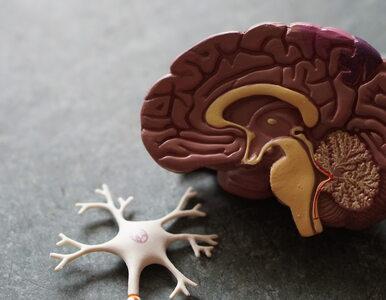 Naukowcy: Poznaliśmy jedną z przyczyn leukodystrofii – choroby mózgu