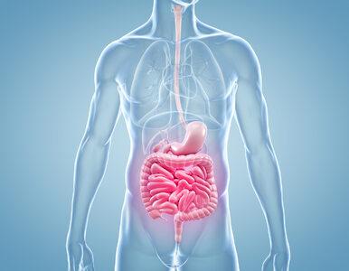 Przeszczep treści jelitowych pomoże w walce z otyłością i cukrzycą