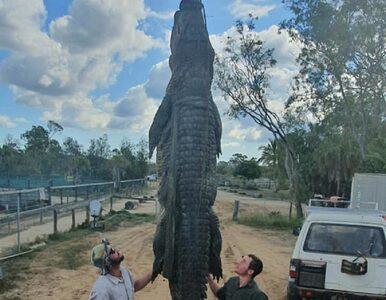 Skąd wzięło się to w żołądku 70-letniego krokodyla? Właściciel gada jest...