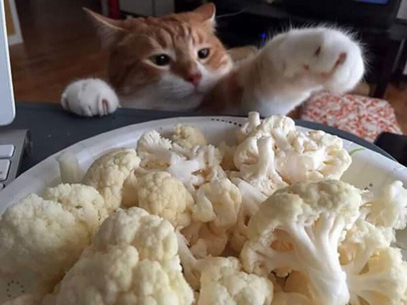 Ten kot podobno jest fanem surowego kalafiora