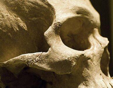 Neandertalczycy zginęli, bo widzieli za dużo