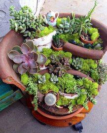 Stłuczona donica? To może być początek pięknego ogrodu!