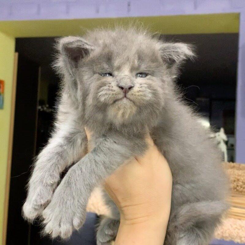 Kot z zrzędliwą miną