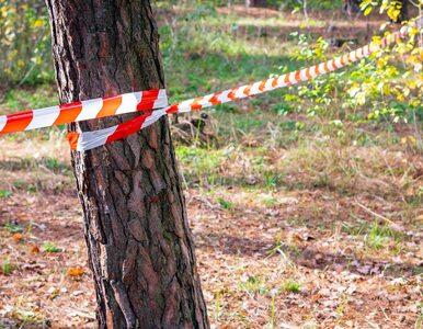 Zwłoki 30-latka w lesie koło Łodzi. Zarzuty usłyszało dwoje... policjantów