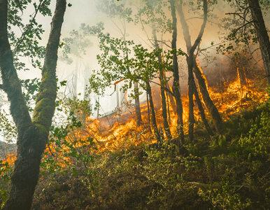 Naukowiec ostrzega: pożary w USA zabójcze dla klimatu