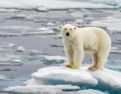 Park narodowy zamiast kopalni węgla. Norwegowie chcą za wszelką cenę...