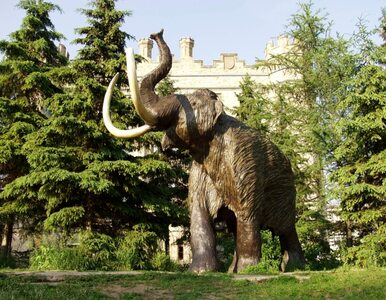 Kości mamuta na polu polskiego rolnika?