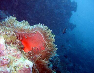 Wielka Rafa Koralowa w niebezpieczeństwie