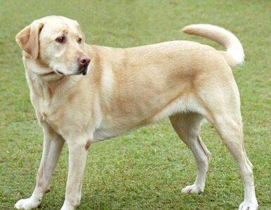 Psy wykryją raka? Mają wspierać tradycyjne badania
