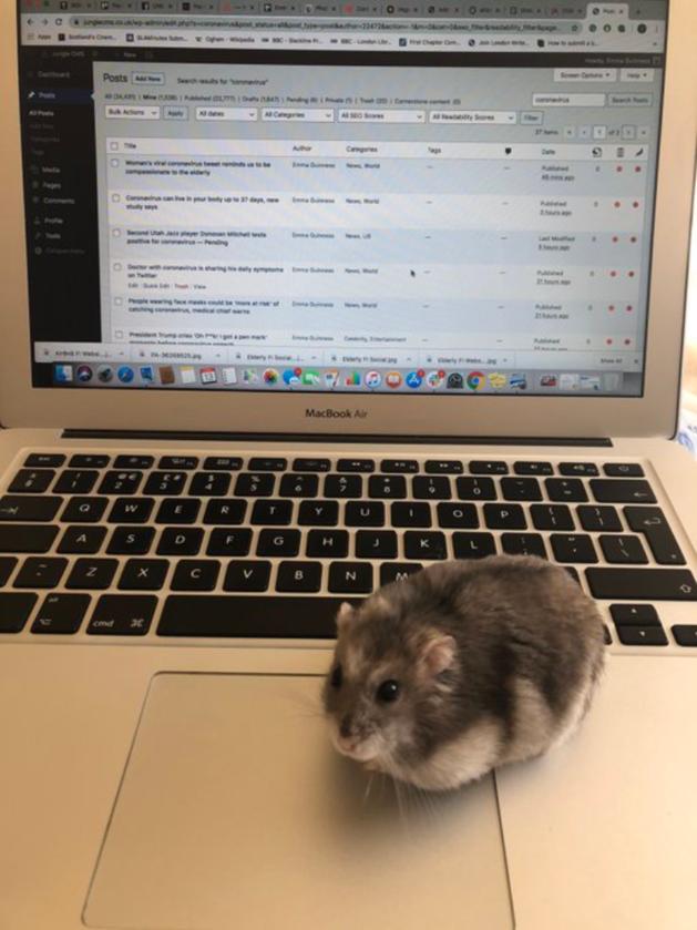 Jak widać w pracę zdalną angażują się nie tylko koty i psy
