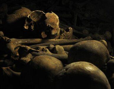 Worki z kośćmi i dziesiątki szczątków na komisariacie