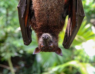 Dzikie zwierzęta mogą przenosić choroby. A handel nimi kwitnie w internecie
