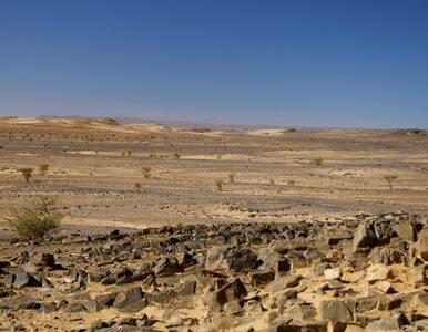 Człowiek ewoluował dzięki... szybkim zmianom klimatu w Afryce?