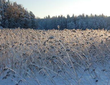 We wtorek w wielu miejscach śnieg. Kolejne dni z zimową aurą