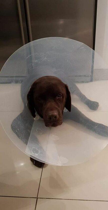 Fado po operacji