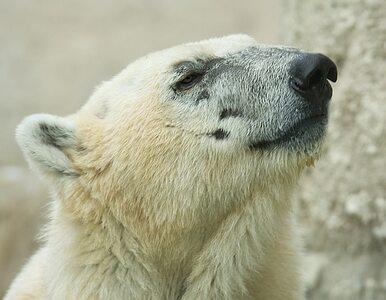 Rosja: in vitro uratuje zagrożone gatunki