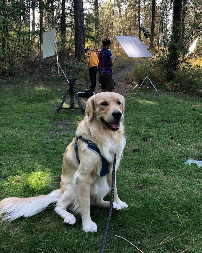 Golden retriever Leny