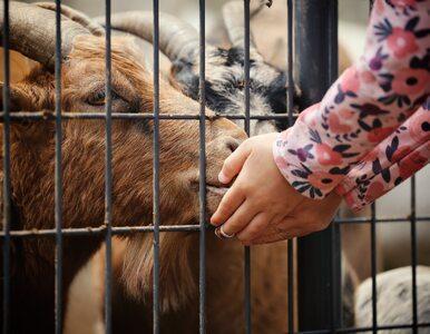 Dwulatek zaraził się bakterią w mini zoo. Zmarł w szpitalu