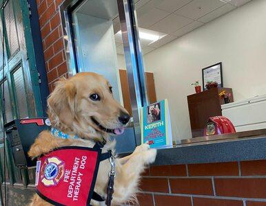 Pies-terapeuta podbija sieć. Nie zobaczycie dziś nic słodszego