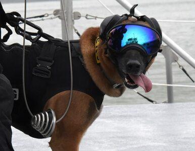 W goglach, na pontonach i jako maskotki. Tak wygląda życie psów w armii
