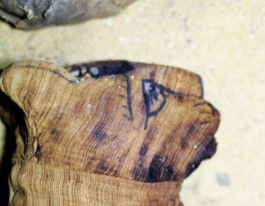 Niezwykłe odkrycie w Egipcie. Ministerstwo pokazało zdjęcia mumii kotów