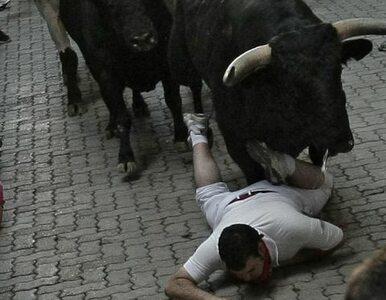 Robił zdjęcie z bykiem. Policja chce go ukarać, bo był... nieodpowiedzialny