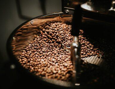 Najdroższa kawa świata. To wcale nie słynna Kopi Luwak