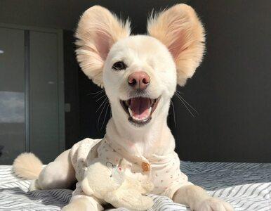Pies bez oka podbija serca internautów. Jego przyjaciel jest równie...