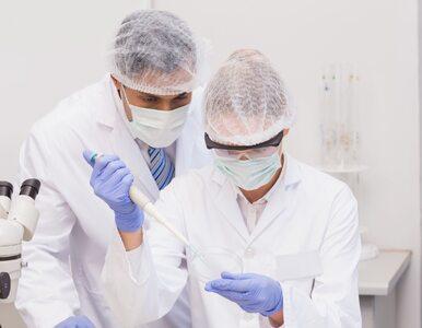 Przeszczep bakterii z jelit lekiem na koronawirusa? Nowatorskie badanie...
