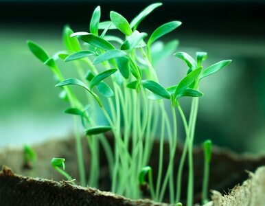 """Trend na ekologię jest powierzchowny. Większość w """"byciu eko"""" dostrzega..."""