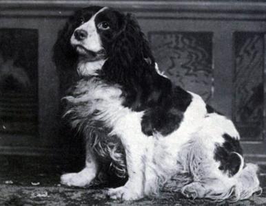 25+ ras psów, które wyginęły. Najciekawsze fakty i zdjęcia
