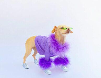 To najbardziej stylowy pies na świecie? Teraz może tak wyglądać każdy...
