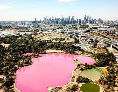 Jezioro nagle zmieniło kolor na różowy. Turyści są zachwyceni, ale jak...