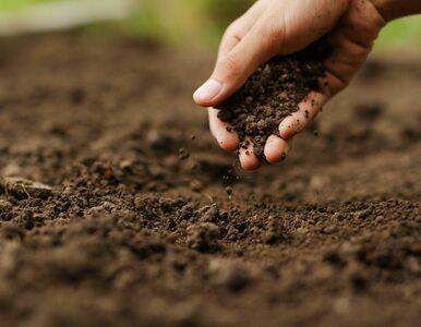W rejonie Raciborza rolnik trafił na groby sprzed 4 tys. lat....