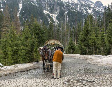 Zakopane. Tłumy turystów pod Tatrami, zamknięta droga na Morskie Oko