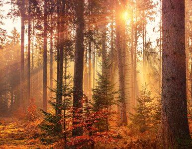 Kąpiele leśne. Ukoją nerwy, dodadzą energii, poprawią zdrowie