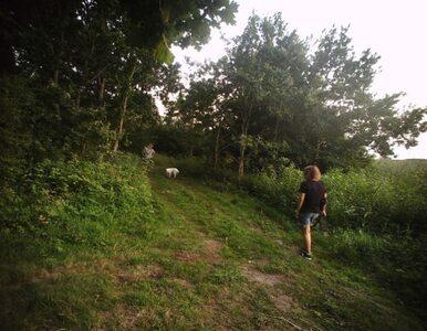 Spacer z psami kosztował ich 600 złotych. Mandaty dla turystów