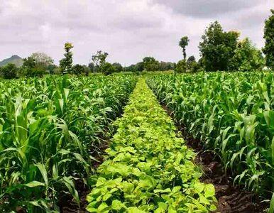 Nestlé stawia na rolnictwo regeneracyjne. Także w Polsce