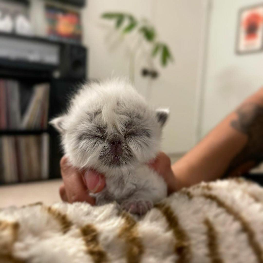 Kotek o imieniu Dziadek