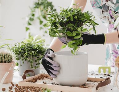 Świat roślin – porady dla początkujących