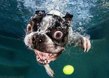 Podwodne potwory? Nie, to tylko aportujące psy. Ale perspektywa...