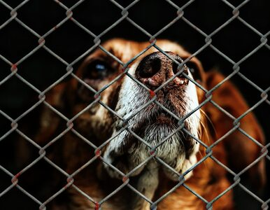 Schroniska tymczasowo zakazują adopcji zwierząt. To zaplanowana akcja