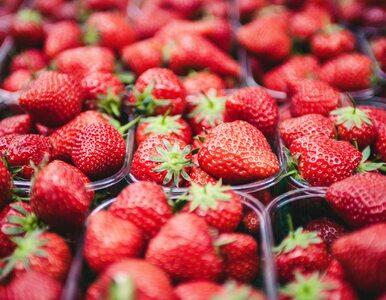 Owoce i warzywa drożeją. Nie ma ich komu zbierać