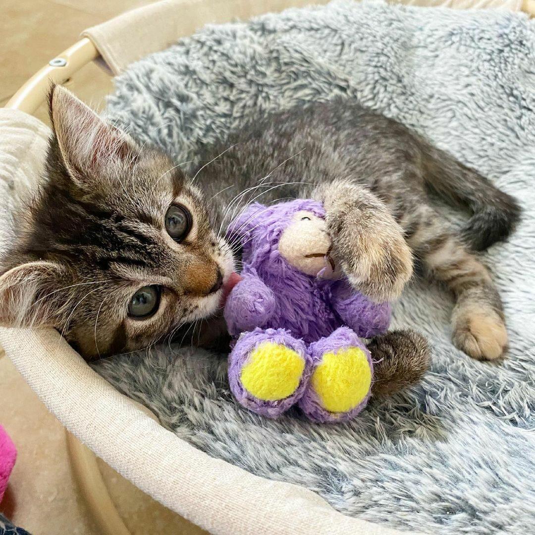 Kotka Matilda ze swoją maskotką - Lamby Beans