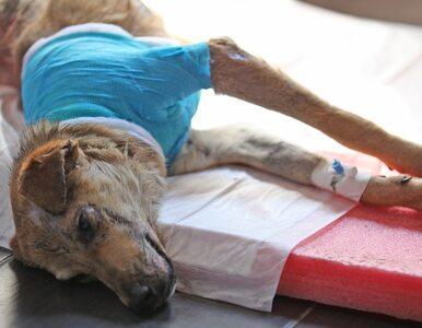 Puck: Skatowali psa i zakopali go żywcem. Trafią do więzienia