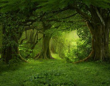 Przypadkiem odnaleziono skamieliny najstarszego lasu świata. Ma 385...
