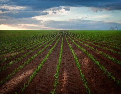 Biologizacja, czyli sposób na suszę