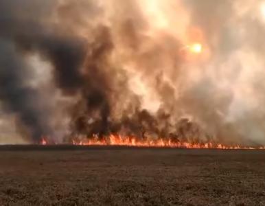 Minister środowiska: Grzywny za wypalanie traw wzrosną do 30 tys. zł