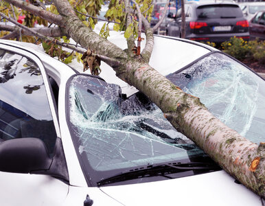 Pociąg osobowy uderzył w drzewo powalone przez wiatr. Co najmniej trzy...
