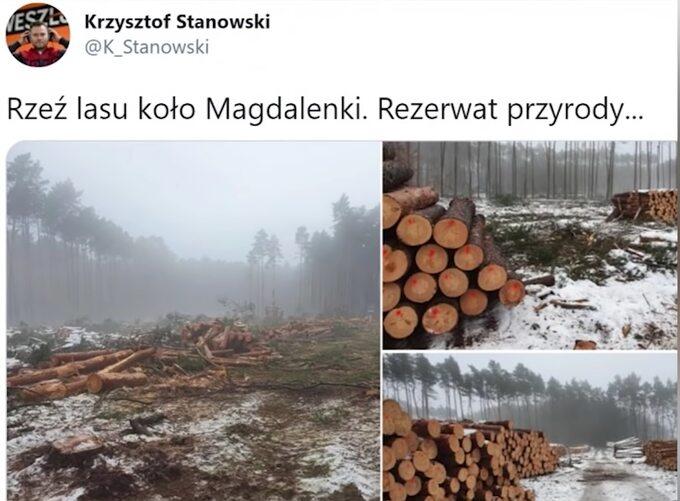 Wpis Krzysztofa Stanowskiego owycince lasu